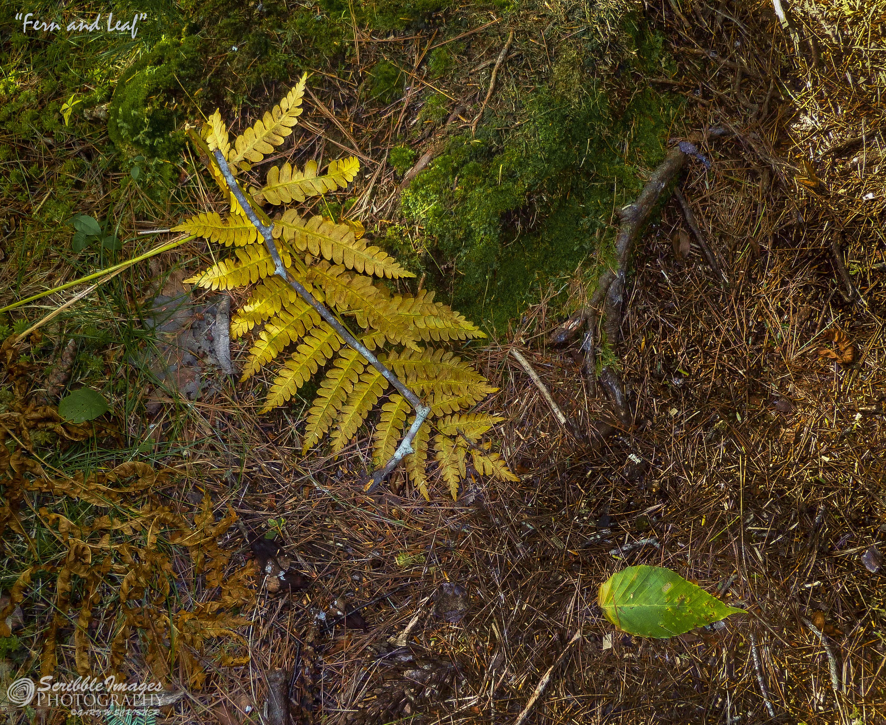 P1070398 Fern and Leaf