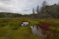 _D853014 Two Brown Ponds-5