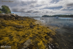 _D853161 Rockweed Mounds-5