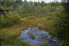 P1070454 Harpswell Bog