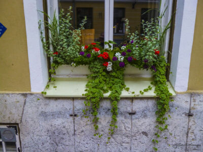 Window Flower Box, Tallinn sidestreet