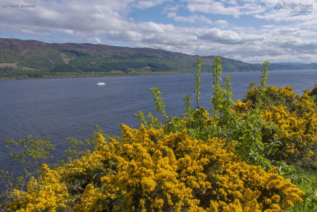 Gorse, Loch Ness