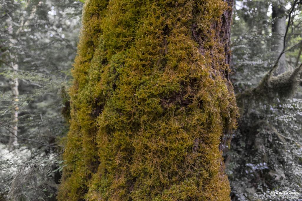 Moss Over Bark