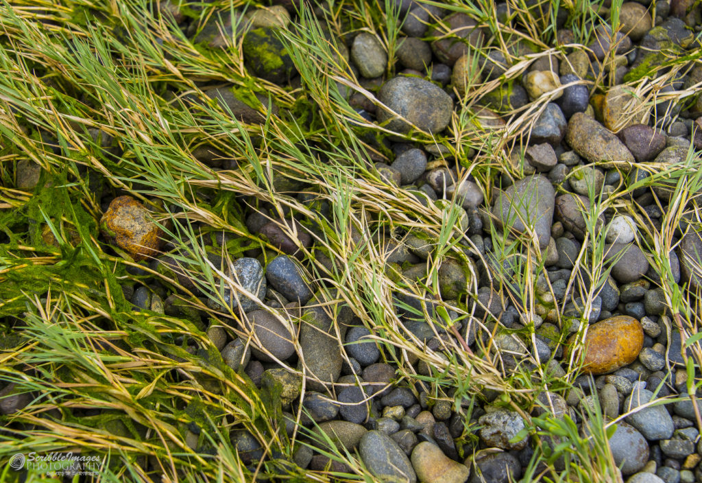 Seagrass and Pebbles
