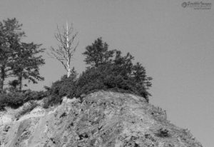 Bare Tree on a Hill