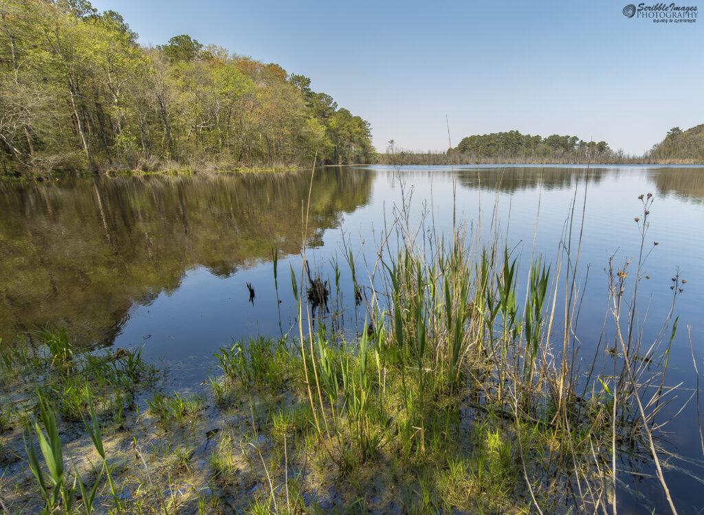 Prime Hook Pond Scenic