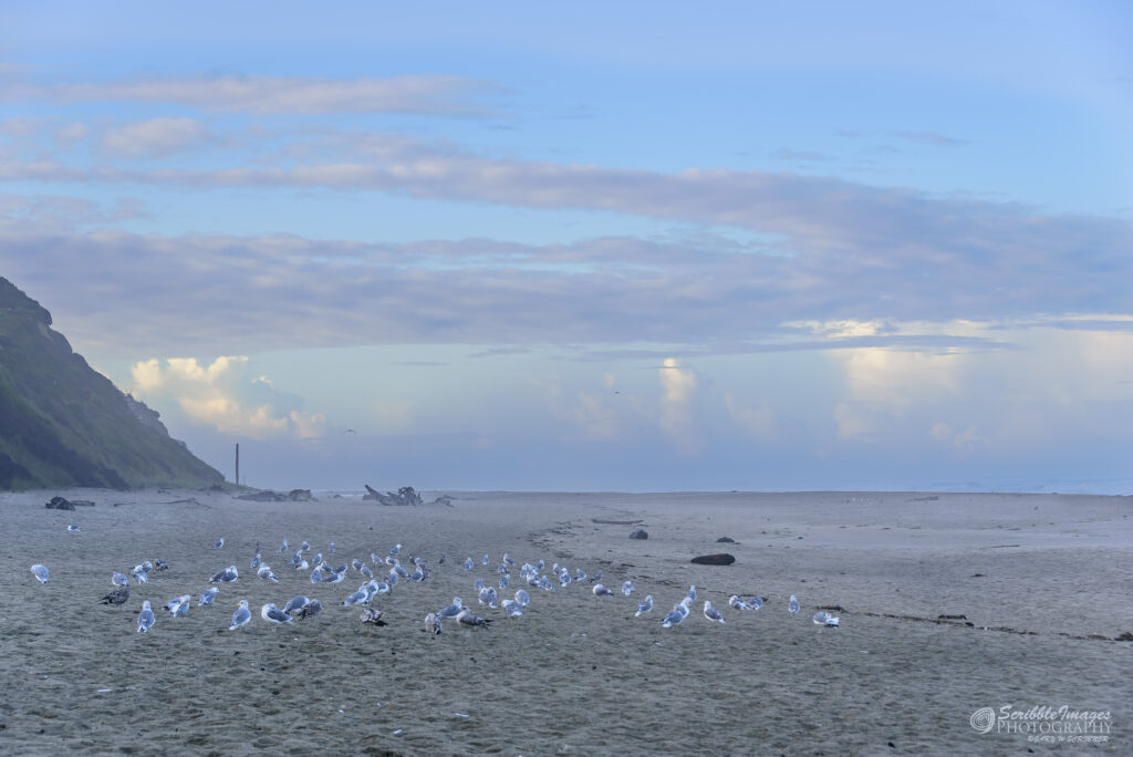 Another Seagull Convention