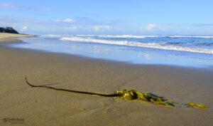 Sea Plant Tentacle