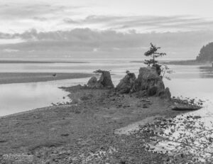 Shoreline Formations