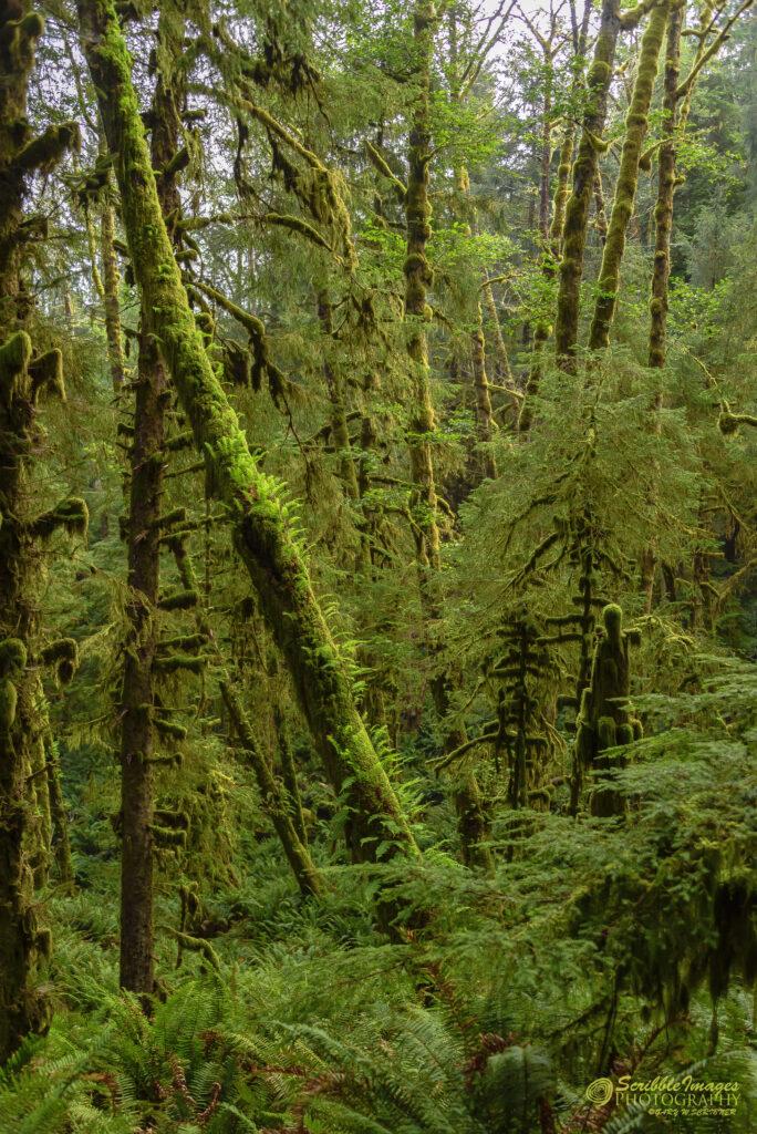 Green Fuzzy Trees
