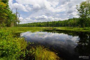 Cumulus Wetlands Reflections